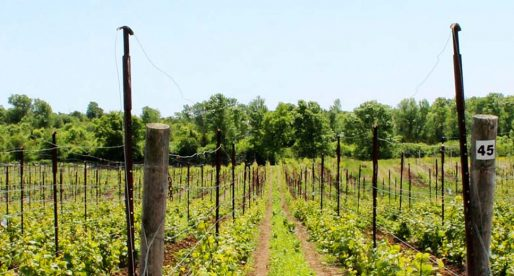 Destination wine country – Closson Chase Winery