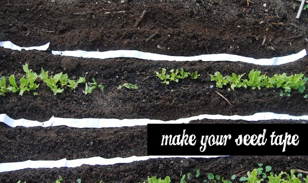 Making DIY Seed tapes for your vegetable garden